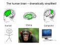 Meet Your Chimp